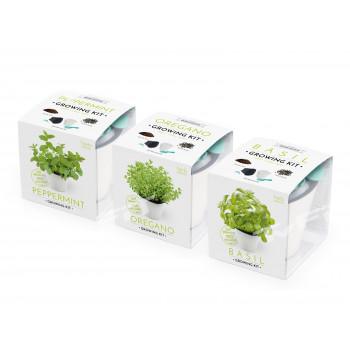 Vypěstuj si BAZALKU, OREGANO, MÁTU, set 3v1, samozavlažovací květináč bílý 10x10 cm, Domestico