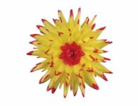 Květ voskový JIŘINA KAKTUS žluto červený 15cm