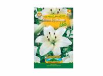 Lilium WHITE 2ks Gardenia