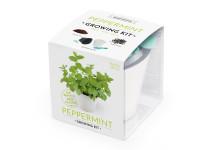 Vypěstuj si MÁTU, samozavlažovací květináč bílý 10x10 cm, Domestico