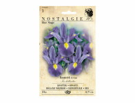 Iris hollandica – kosatec BLUE MAGIC Nostalgie 10 ks