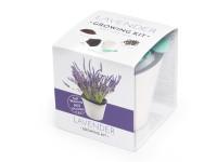 Vypěstuj si levanduli, samozavlažovací květináč bílý 10x10 cm, Domestico