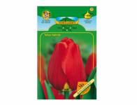Tulipán, Darwinovy hybridy APELDOORN 5ks