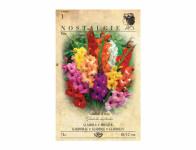 Gladiolus SMĚS 7ks Nostalgie