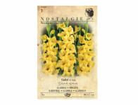 Gladiolus NOVA LUX 7ks Nostalgie