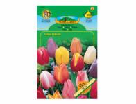 Tulipán triumph, směs 5ks