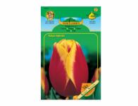 Tulipán triumph KEES NELIS 5ks