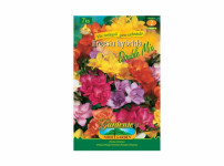 Freesia DOUBLE Gardenia 7ks