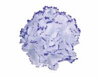 Květ voskový KARAFIÁT bílo fialový 9cm