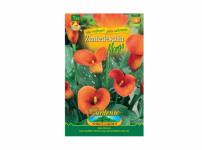 Zantedeschia MANGO 1ks Gardenia