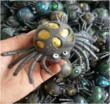 Pavouk mačkací