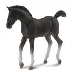 Tennessee Walking Horse - hříbě černé