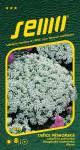 Semo Tařice přímořská - Corbielle d´argent bílá 0,6g