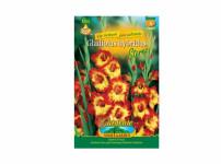 Gladiolus STEREO 6ks Gardenia