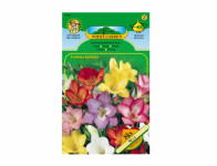 Freesia SINGLE Standard 8ks