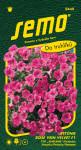 Semo Petunie převislá - Rose Vein Velvet F1 (typ Surfinie) 10p