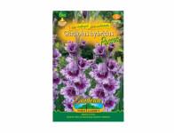 Gladiolus PASSOS 6ks Gardenia