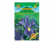 Iris hollandica – kosatec BLUE MAGIC Standard 10 ks