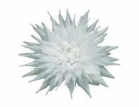 Květ voskový JIŘINA KAKTUS bílý 15cm