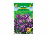 Šafrán, krokus zahradní FLOWER RECORD 8ks