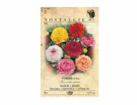 Pryskyřník – Ranunculus Asiatikus – 8ks Nostalgie