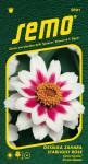 Semo Ostálka - Zahara® Starlight Rose 15s