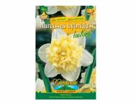 Narcis zahradní, plnokvětý ICE KING 4ks