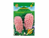 Hyacint zahradní ANNA MARIE 3ks