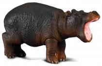 Hroch mládě