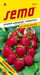 Semo Jahodník velkoplodý - Grandian F1 12s - série Pro mlsné jazýčky