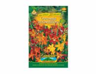 Crocosmia MONTBRETIA 10ks Gardenia
