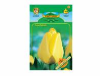 Tulipán, Darwinowy hybridy GOLDEN APELDOORN 5ks