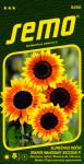 Semo Slunečnice roční - Orange Mahogany Bicolour F1 8s