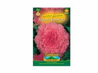 Begonia růžová Gardenia 2ks