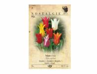 Tulipán liliokvětý, směs 5ks