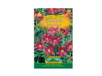 Hemerocallis RED 1ks Gardenia