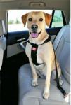 Postroj pes Bezpečnostní do auta XL Zolux - VÝPRODEJ