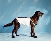 Bandáž břišní  pro psy č.4, délka 51cm Henry Schein
