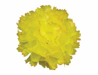 Květ voskový KARAFIÁT žluto oranžový 9cm