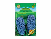 Hyacint zahradní DELFT BLUE 3ks