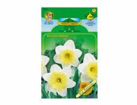 Narcis zahradní, velkokorunný ICE FOLLIES 4ks